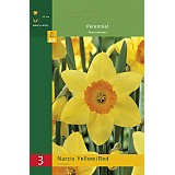 Narcis Yellow/Red - 3ks
